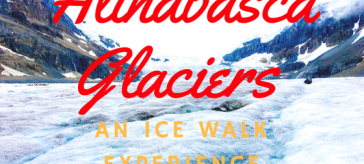 Icewalk columbia icefields
