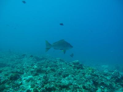 Northern Cebu: Diving in Malapascua 19