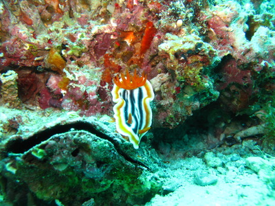 Northern Cebu: Diving in Malapascua 35