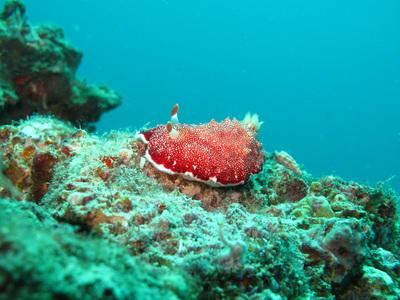 Northern Cebu: Diving in Malapascua 34