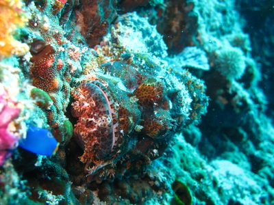 Northern Cebu: Diving in Malapascua 30