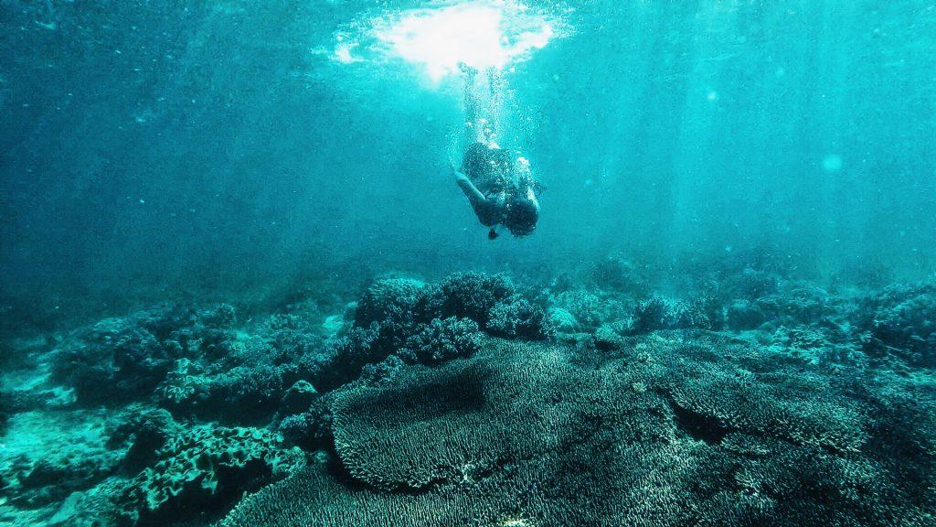 Coral Garden Apo Island