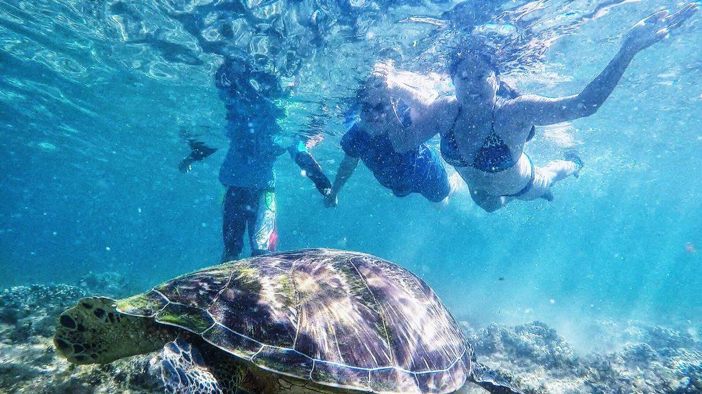 apo island-turtle-dumagute