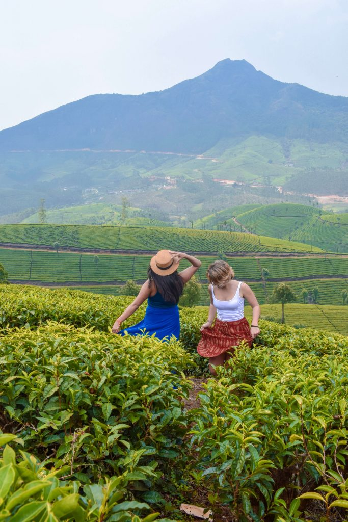 Must-visit-places-in-Munnar
