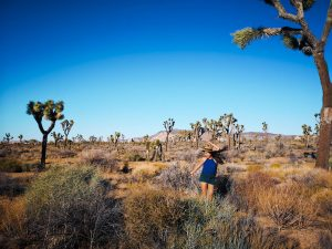 Best hikes in Joshua Tree Park