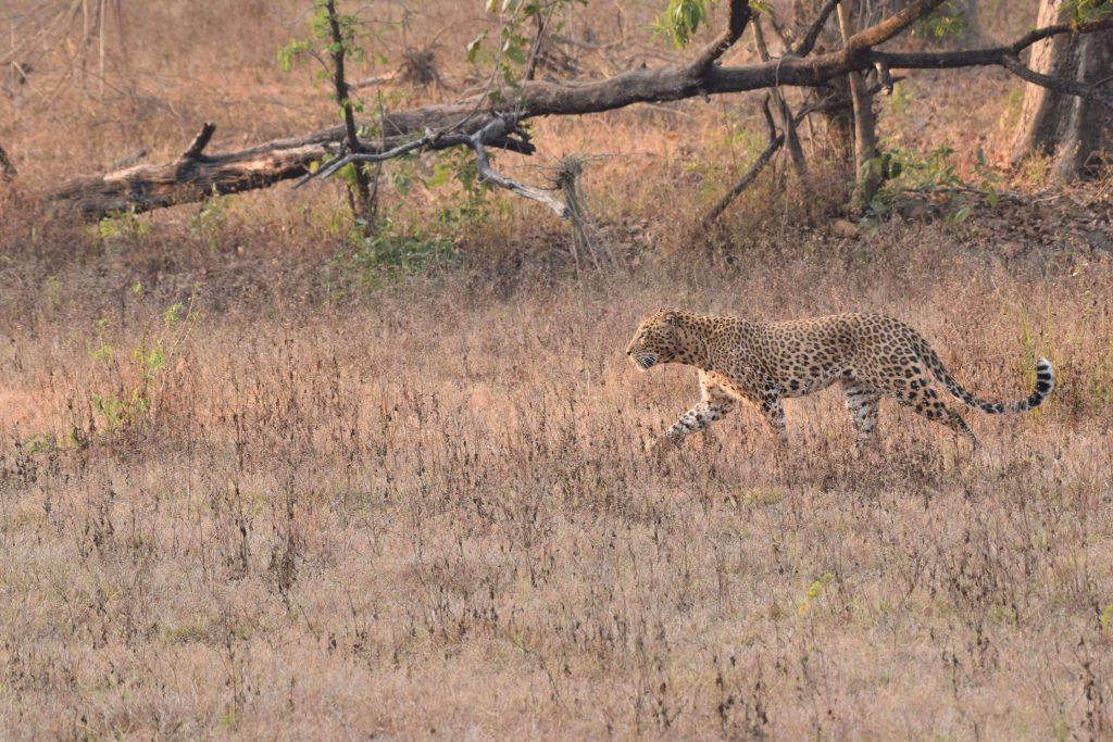 Kanha Earth Lodge Pugdundee Safaris