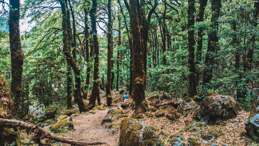 dense forest langtang trek