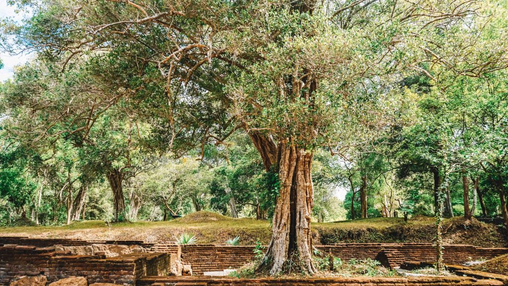 Things to see in Anuradhapura