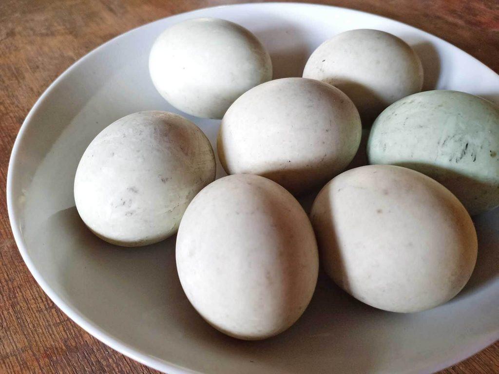 Salt Farm Tours - Pacific Farms Agri-Eco Tour - Might Energy Eggs