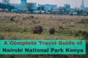 Nairobi National Park Travel Guide