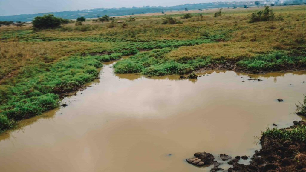 Nairobi National Park  Safarii