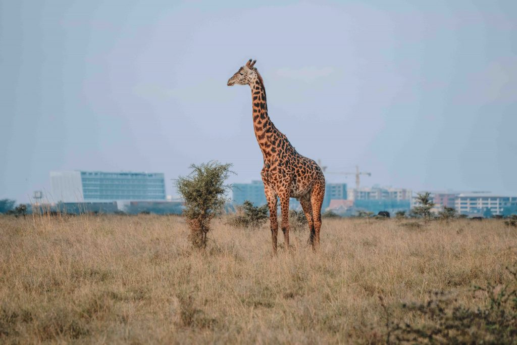 Nairobi National Park Animals