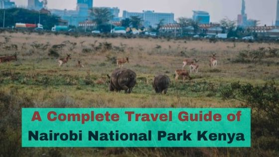 Nairobi National Park Travel Guide