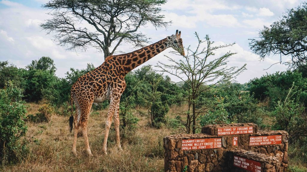 Nairobi National Park Animals