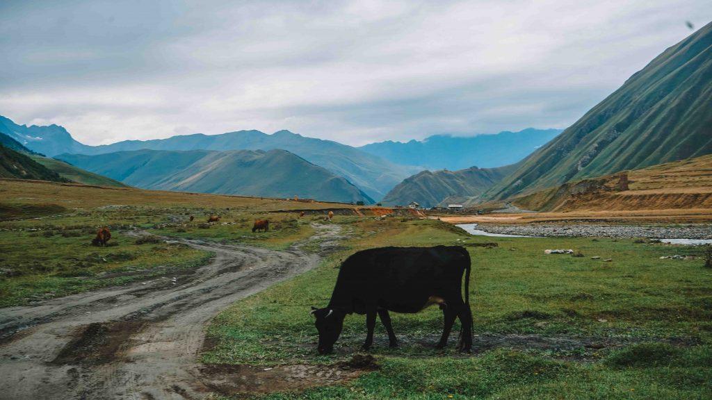 Day hikes from Kazbegi