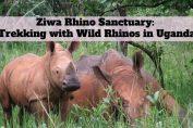 Rhino Ziwa Sanctuary